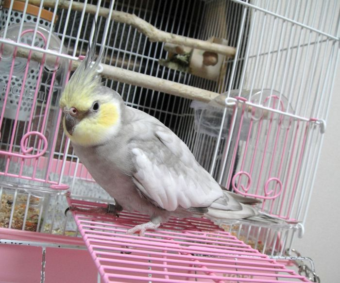 f:id:birdcrown:20181024160929j:plain