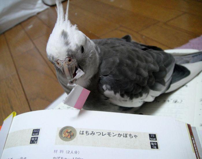 f:id:birdcrown:20181028183034j:plain