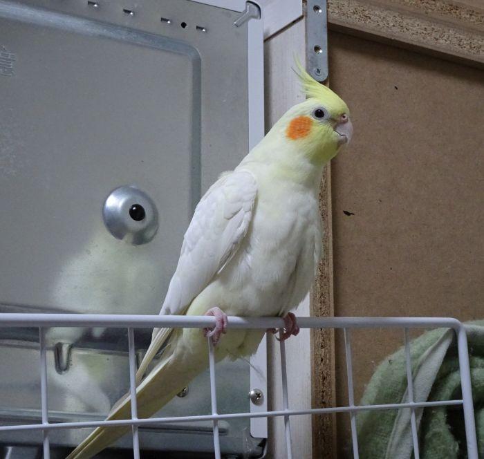 f:id:birdcrown:20181028211611j:plain