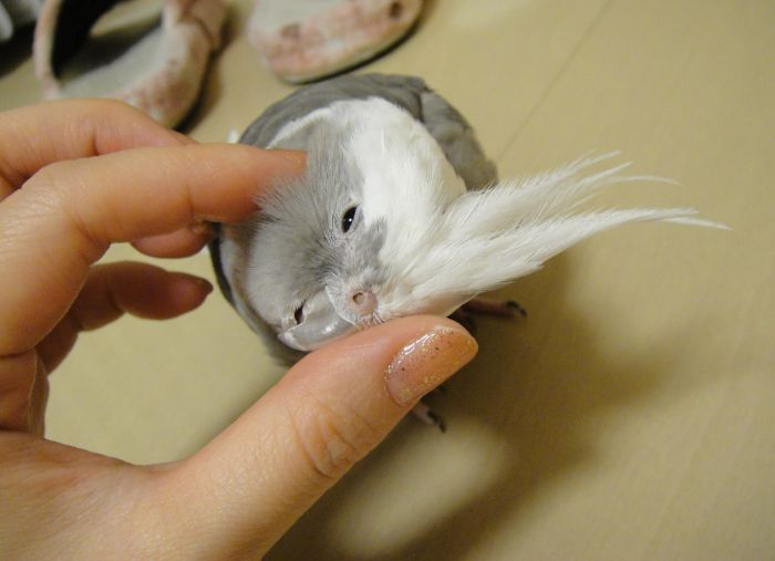 f:id:birdcrown:20181110235206j:plain