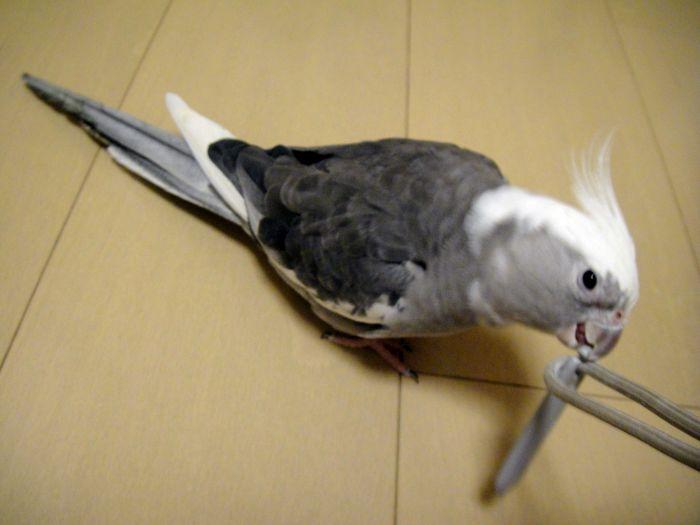 f:id:birdcrown:20181110235236j:plain