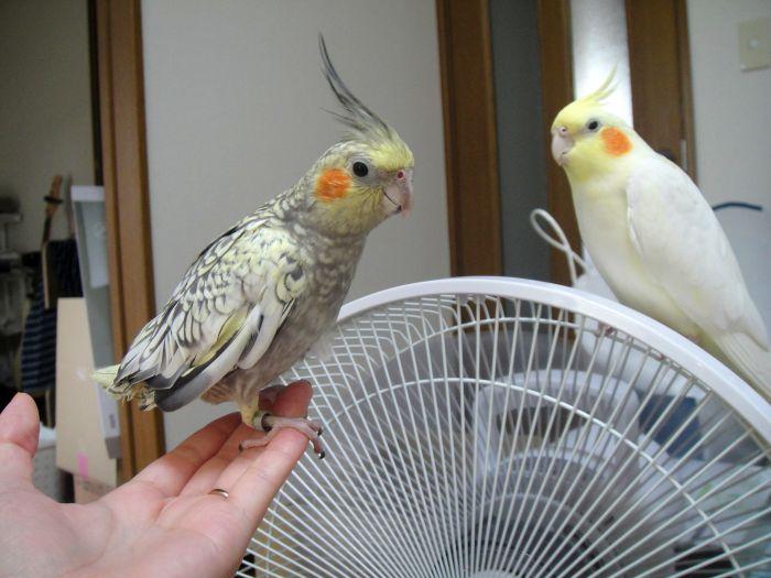 f:id:birdcrown:20181110235603j:plain