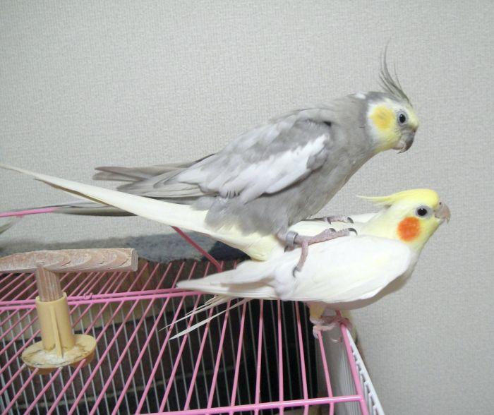f:id:birdcrown:20181111121421j:plain