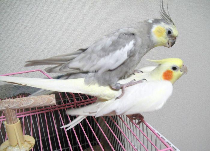 f:id:birdcrown:20181111121535j:plain
