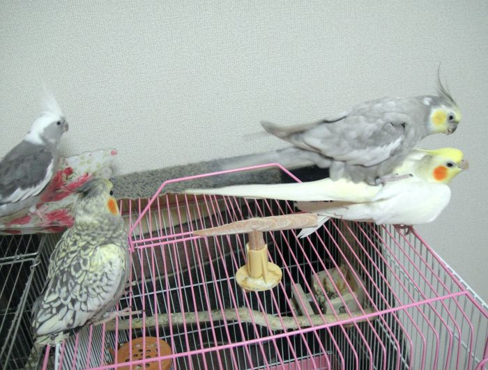 f:id:birdcrown:20181111121611j:plain
