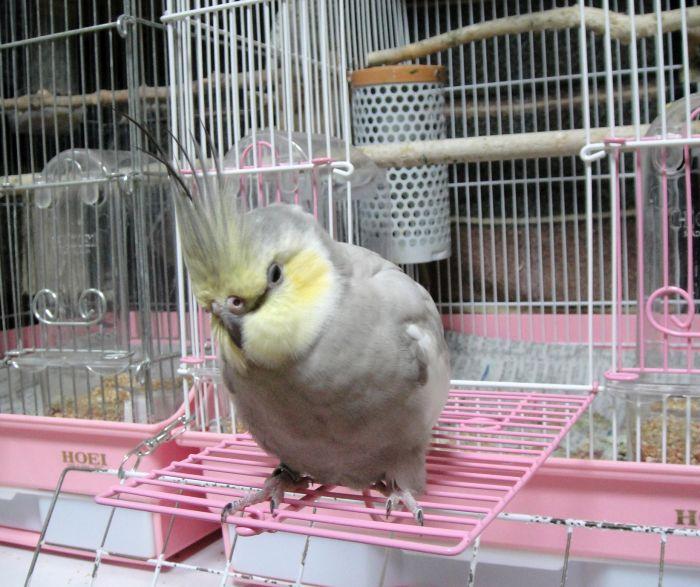 f:id:birdcrown:20181111121734j:plain