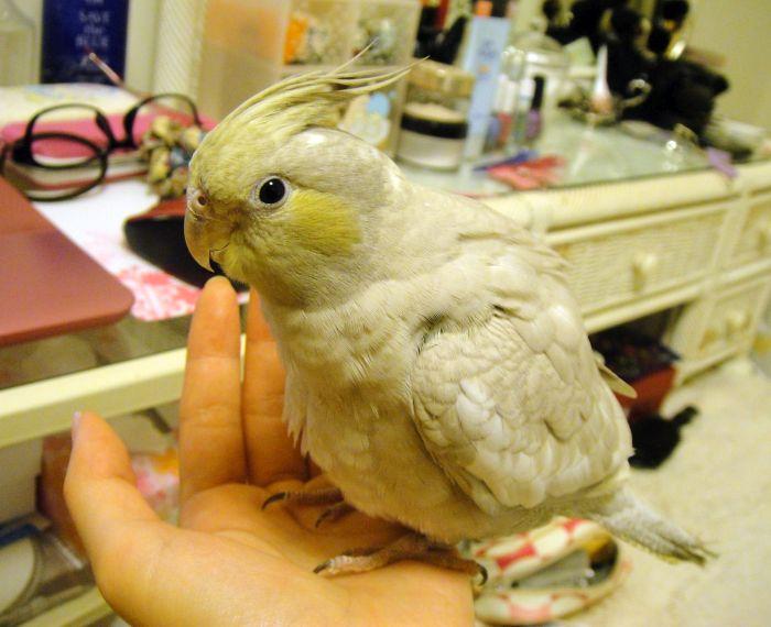 f:id:birdcrown:20181111161819j:plain