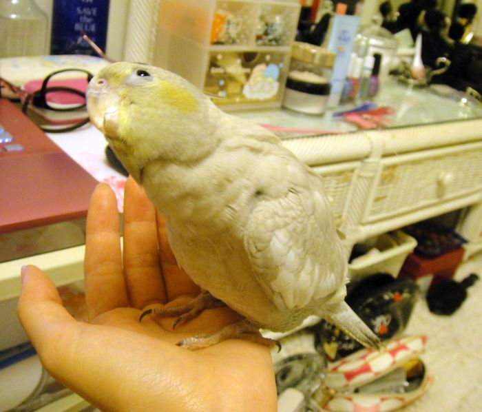 f:id:birdcrown:20181111161902j:plain