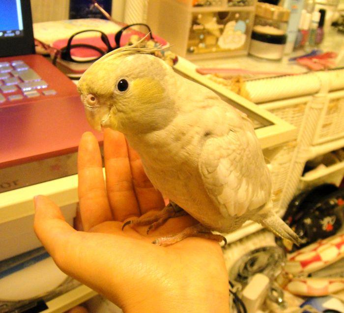 f:id:birdcrown:20181111161934j:plain