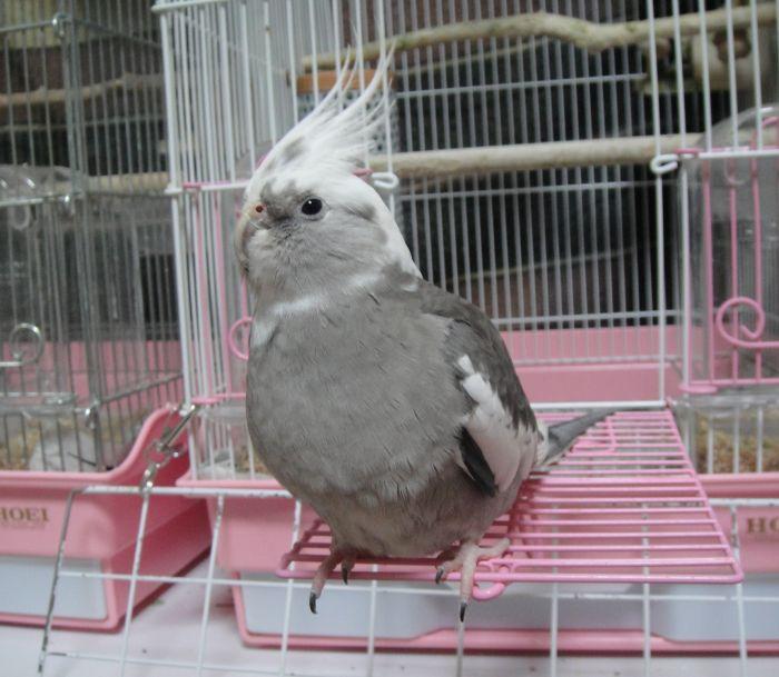 f:id:birdcrown:20181111162107j:plain