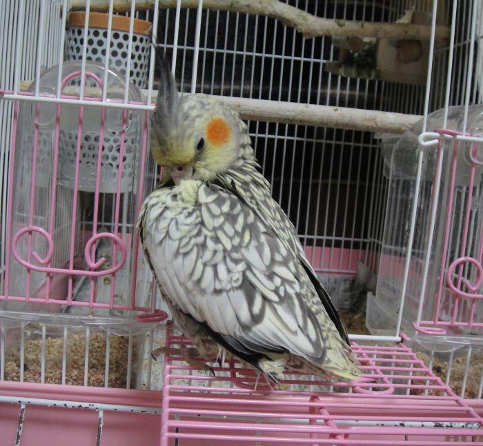 f:id:birdcrown:20181111174847j:plain