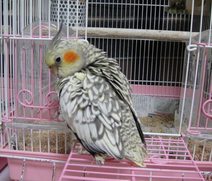f:id:birdcrown:20181111174919j:plain