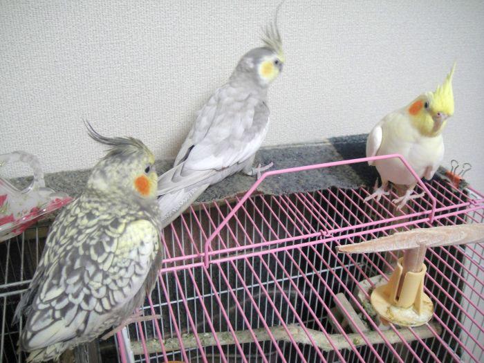 f:id:birdcrown:20181111204542j:plain