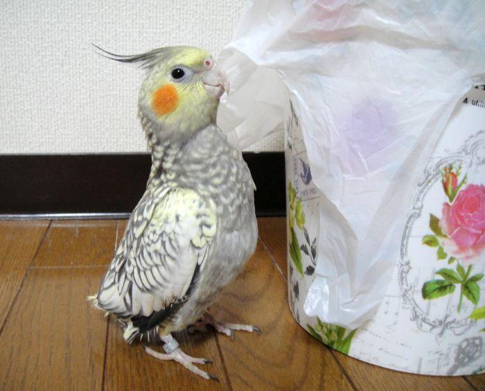 f:id:birdcrown:20181111205327j:plain