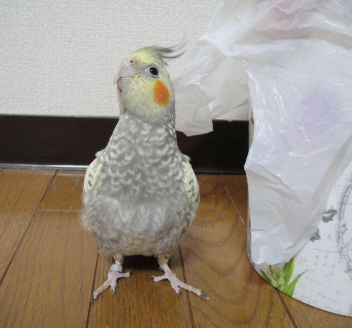 f:id:birdcrown:20181111205352j:plain