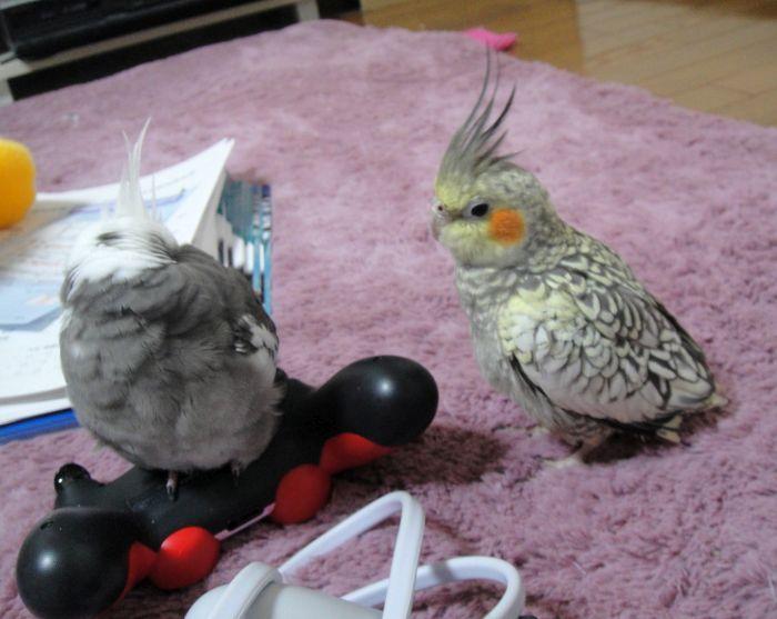 f:id:birdcrown:20181111211618j:plain