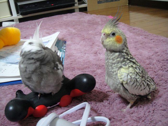 f:id:birdcrown:20181111211640j:plain