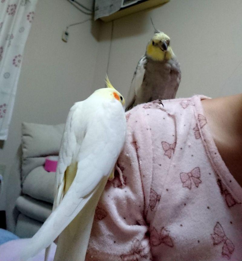 f:id:birdcrown:20181111215022j:plain