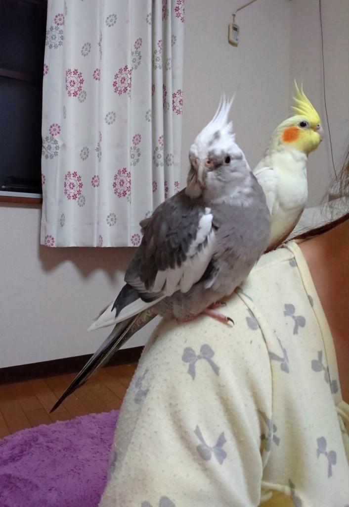 f:id:birdcrown:20181111215150j:plain
