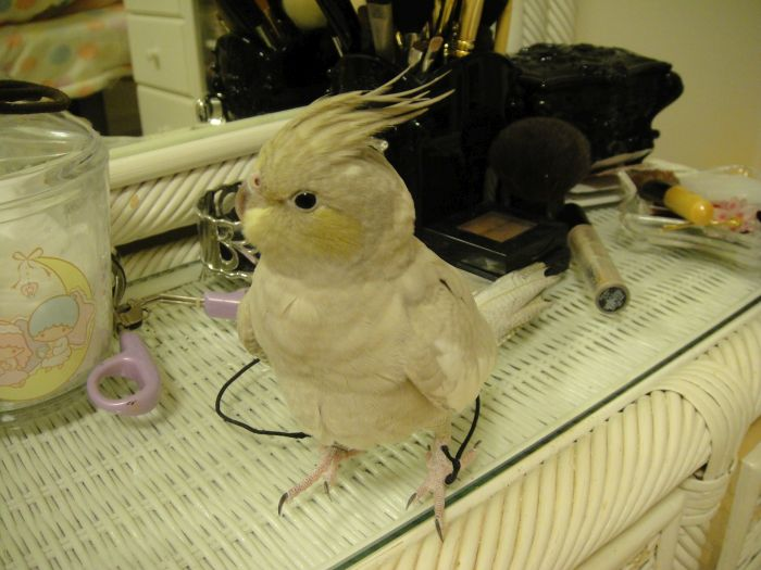 f:id:birdcrown:20181111215630j:plain