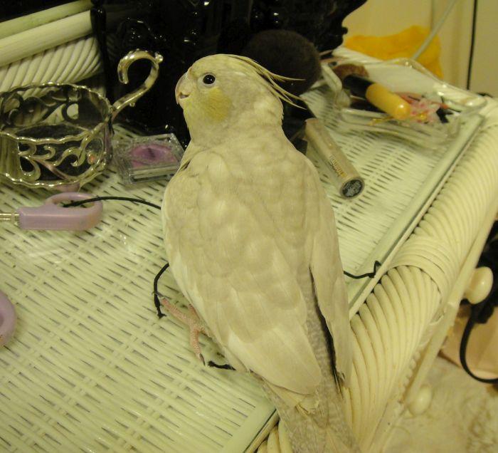 f:id:birdcrown:20181111215653j:plain
