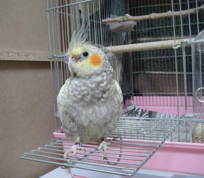 f:id:birdcrown:20181111220411j:plain