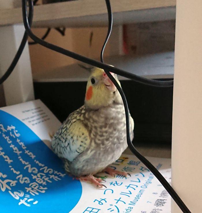 f:id:birdcrown:20181111220516j:plain