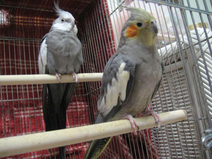 f:id:birdcrown:20181120080724j:plain