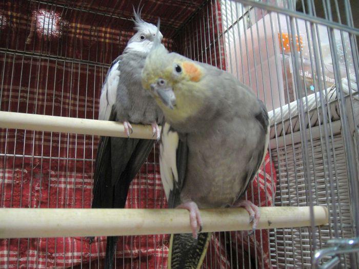 f:id:birdcrown:20181120080815j:plain