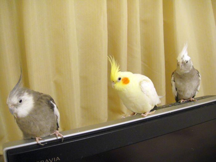 f:id:birdcrown:20181120081020j:plain