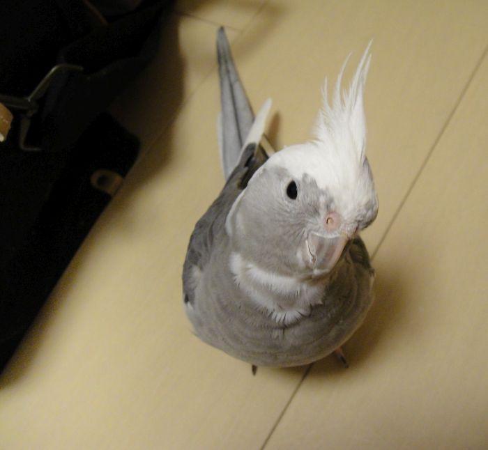 f:id:birdcrown:20181120084810j:plain