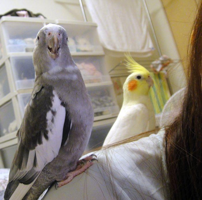 f:id:birdcrown:20181129001608j:plain