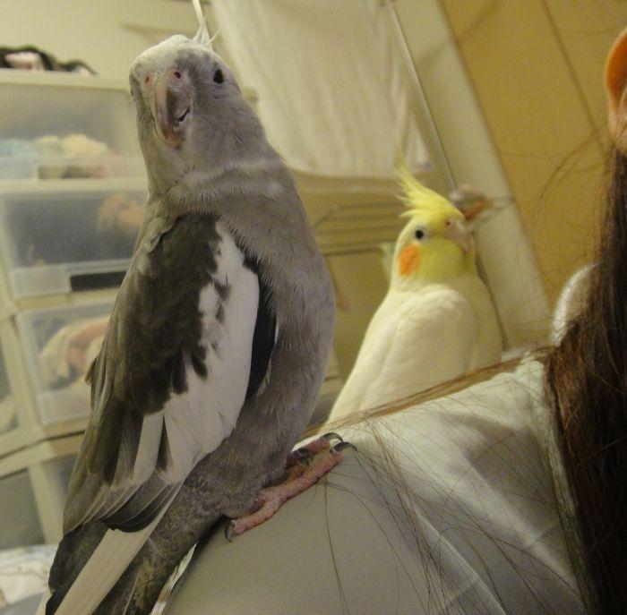 f:id:birdcrown:20181129001632j:plain