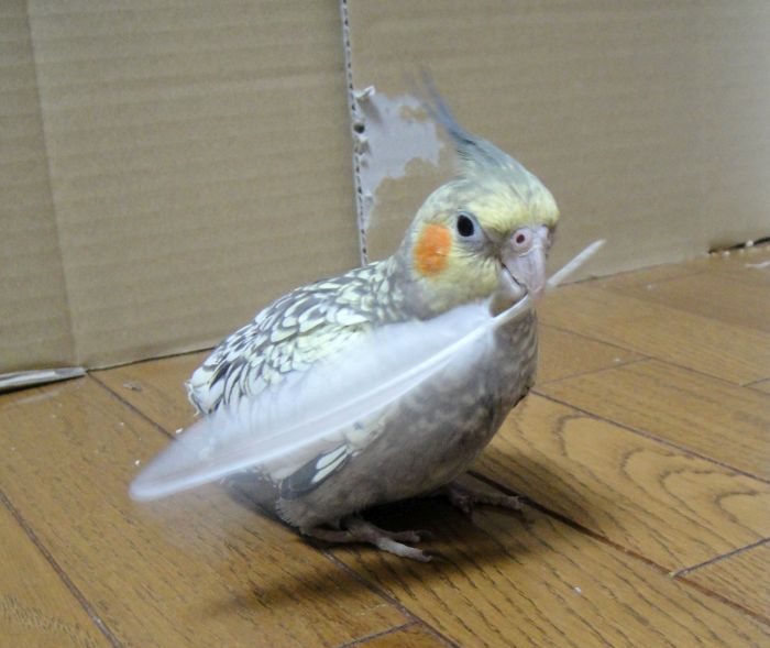 f:id:birdcrown:20181211150555j:plain