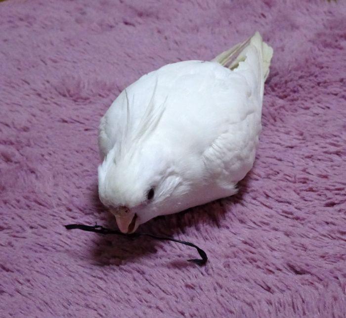f:id:birdcrown:20181211151449j:plain