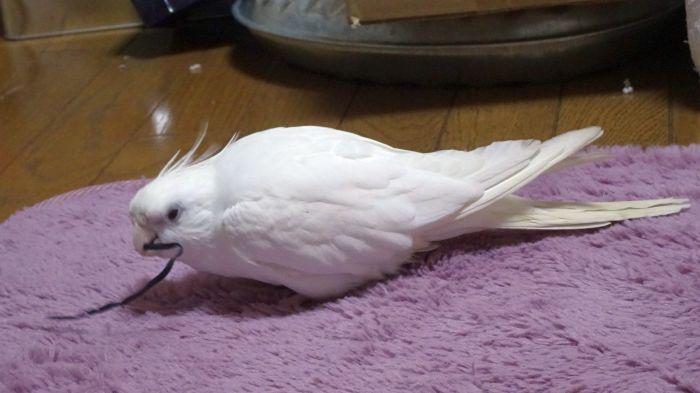 f:id:birdcrown:20181211152745j:plain