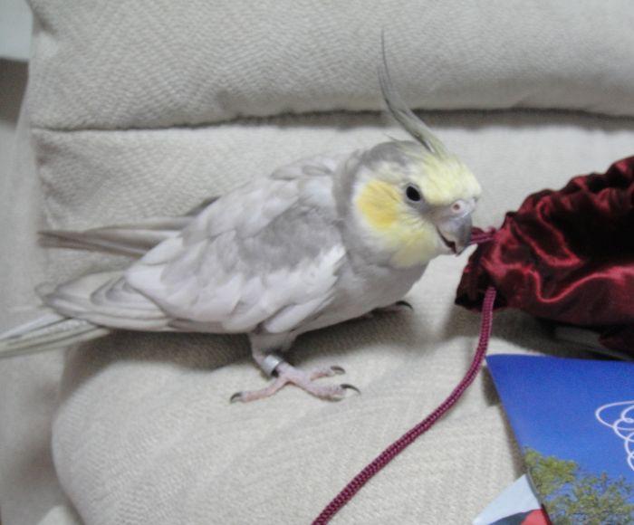 f:id:birdcrown:20181215173113j:plain