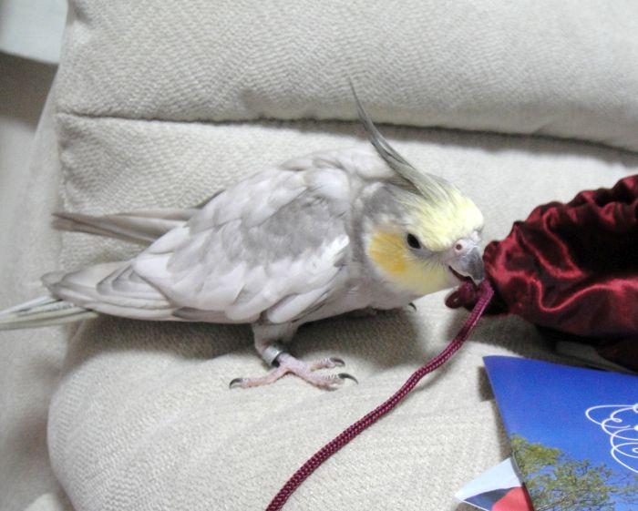 f:id:birdcrown:20181215174030j:plain