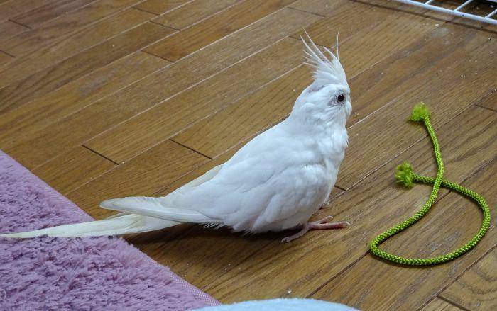 f:id:birdcrown:20181217160846j:plain