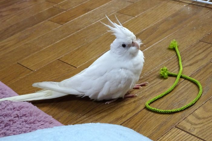 f:id:birdcrown:20181217161544j:plain