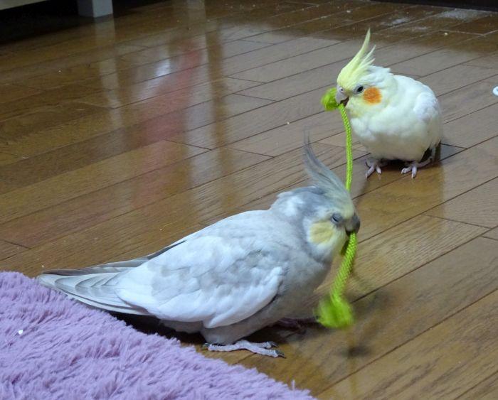 f:id:birdcrown:20181221221320j:plain