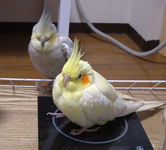 f:id:birdcrown:20181231000415j:plain