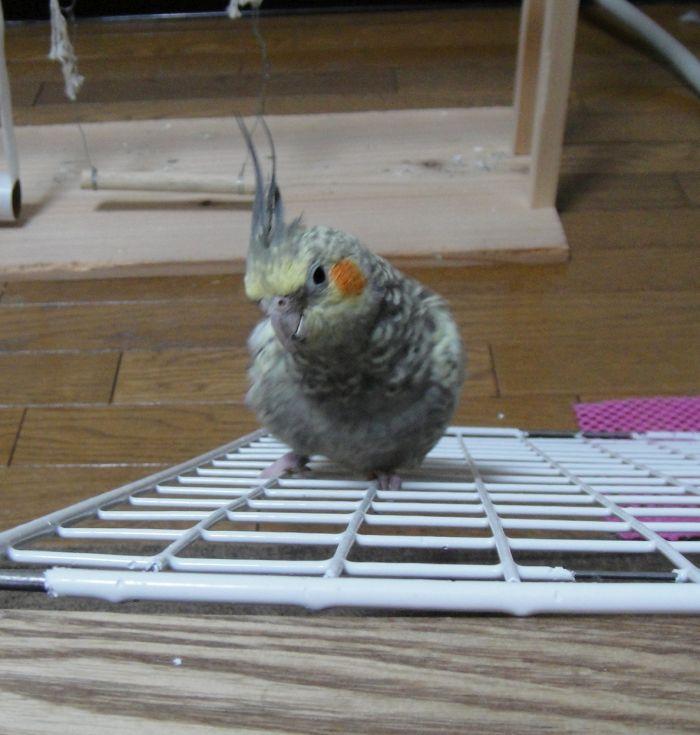 f:id:birdcrown:20181231003919j:plain