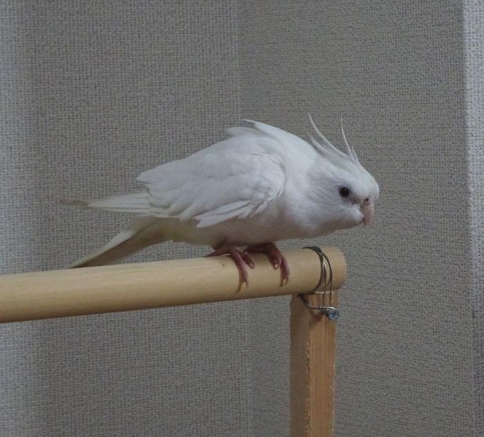 f:id:birdcrown:20190105165949j:plain