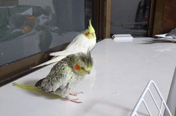 f:id:birdcrown:20190105174804j:plain