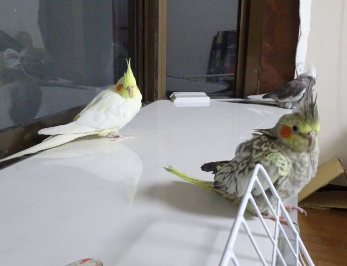 f:id:birdcrown:20190105180538j:plain