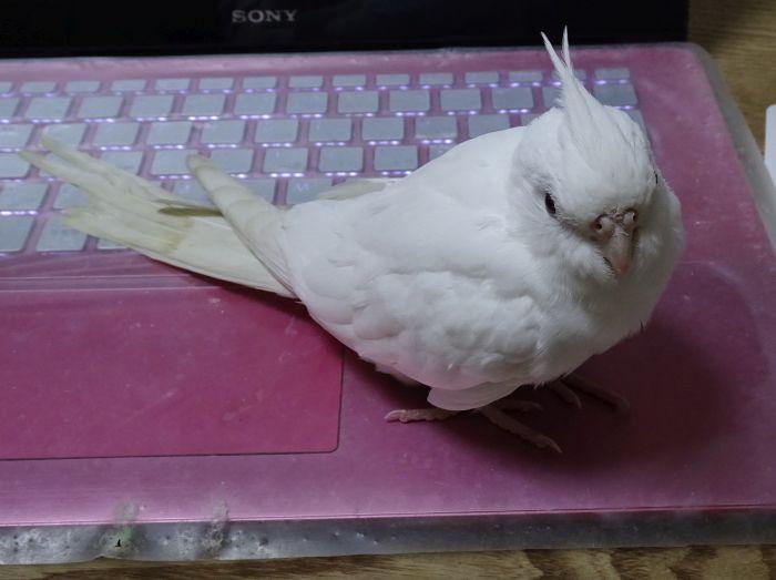 f:id:birdcrown:20190106214822j:plain