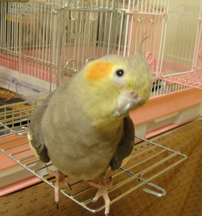 f:id:birdcrown:20190106233457j:plain