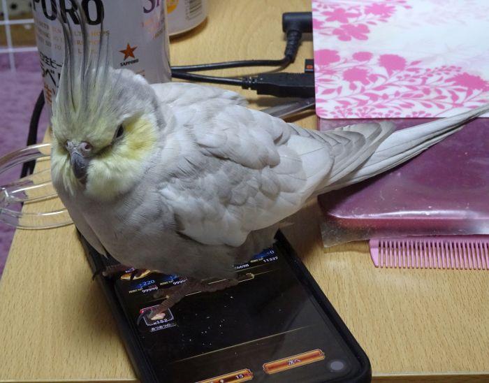 f:id:birdcrown:20190109222950j:plain