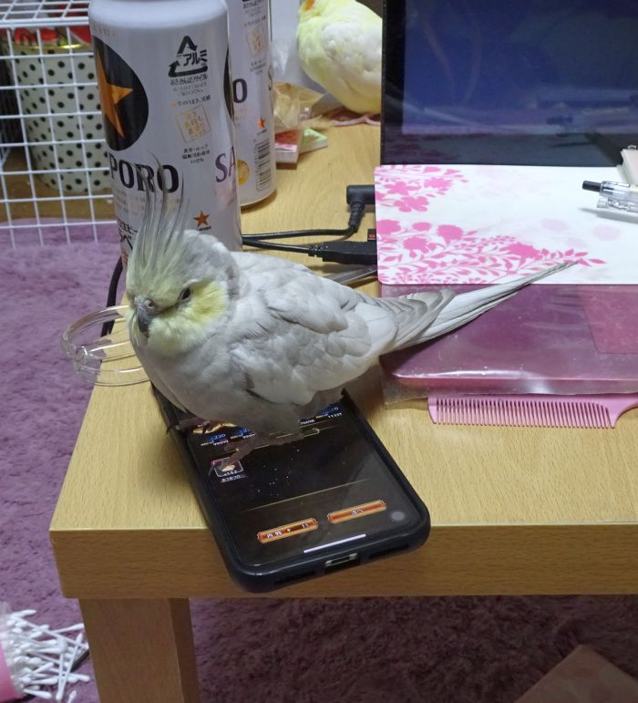 f:id:birdcrown:20190109223821j:plain